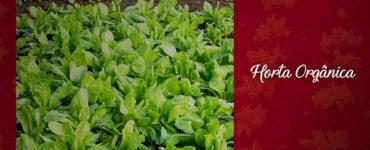 como-cultivar-horta-organica