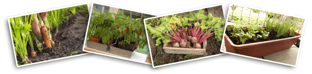 como-fazer-horta-organica-vaso